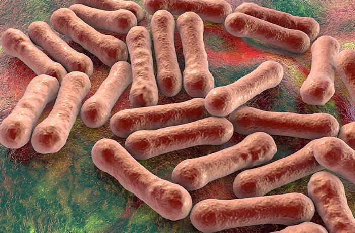 Vi khuẩn Corynebacterium diphtheria